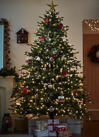 Large Nordman fir Real christmas tree