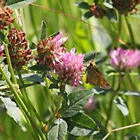 Meadowmat Wildflower turf, 20m² Pack