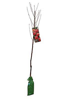 2 Assorted Fruit Trees Diy At B Q