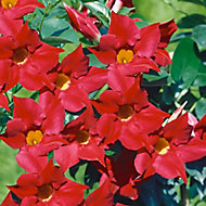 Flowering pyramid