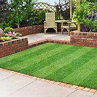 Lawn turf, 33m² Pack