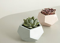 Glazed Duck egg Clay Geometric Plant pot