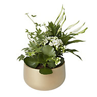 Christmas gold effect planted bowl
