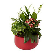 Christmas red planted bowl