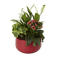 Assorted plants in 20cm Red Ceramic Pot