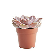 Succulent cacti assorted in 9cm Pot