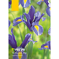 Iris hollandica Sapphire Beauty Flower bulb