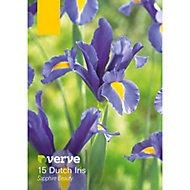 Dutch Iris Sapphire Beauty Bulbs, Pack of 15