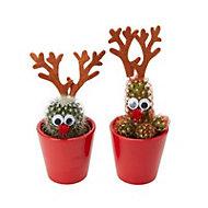Christmas reindeer cactus