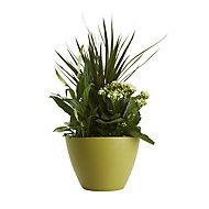 GoodHome Planted houseplant arrangement in 17cm Pot