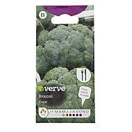 Verve Cezar broccoli Seed