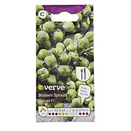 Verve Dolores F1 Brussel sprouts Seed