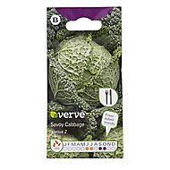 Savoy Cabbage Vertus 2 Seed