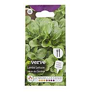 Verve Verte de Cambrai lambs lettuce Seed