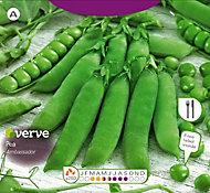 Verve Ambassador pea Seed