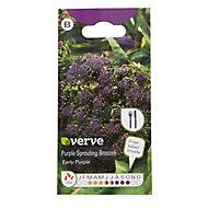 Verve Purple sproating broccoli Seed