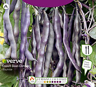 Verve Blauhilde french bean Seed