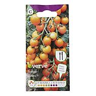 Verve Tomato Goldita F1 Seed