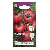 Verve Polorosa F1 tomato Seed