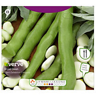 Verve Giant Exhibition Longpod Broad bean Seed