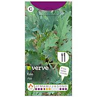 Verve Fizz kale Seed