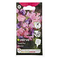 Climbing mix Sweet pea Seed