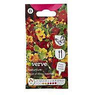 Verve Jewel of Africa Nasturtium Seed