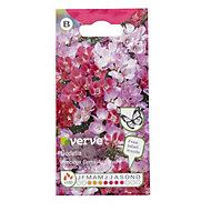 Verve Godetia Precious Gems Seed