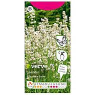 Verve Elegance Snow lavender Seed