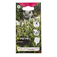 Verve Catmint Seed