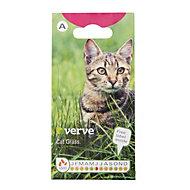Verve Catgrass Seed