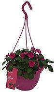 Imara Bizzie lizzie Planted hanging basket 250mm