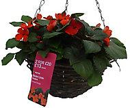Imara Bizzie lizzie Planted hanging basket 300mm