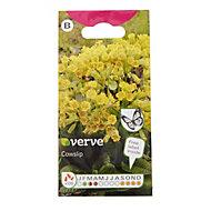 Verve Cowslip Seed