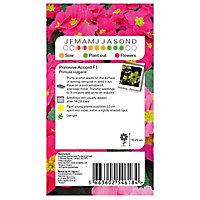 Wanda Primrose Seed