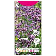 Verve Verbena Seed