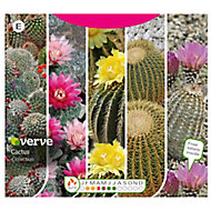 Collection Cactus Seed