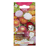 Verve Helichrysum assorted Seed