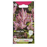 Pink seed Celosia Seed