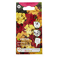 Assorted Wallflower Seed