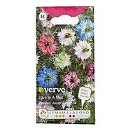 Verve Nigella Love in a mist Seed