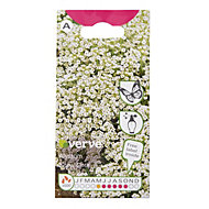Verve Alyssum snow cloth Seed