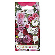 Verve Sweet William Baby Doll Seed