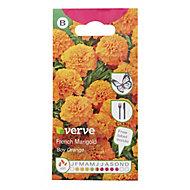 Verve Boy Orange marigold Seed