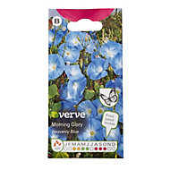 Verve Morning glory heavenly blue Seed