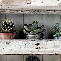 Cycas Multicolour Cactus Smooth Wallpaper