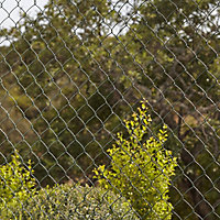 Blooma Steel Wire mesh fencing (L)25m (W)1m