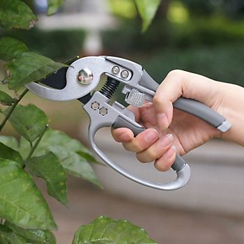 pruning plants