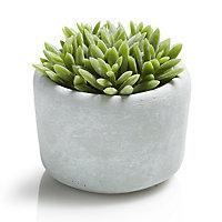White Cactus Decorative plant