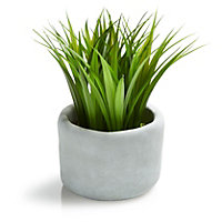 White Grass Decorative plant